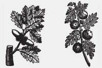 PSD Floral Motifs &#8211; Plant Engravings