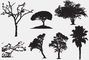 PSD Trees Photoshop Files