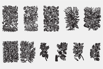 PSD Floral Motifs – Plant Engravings